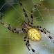 Spider - Live Wallpaper