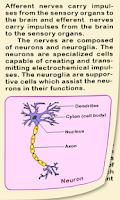 Screenshot of Biology II