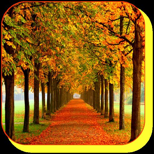 Autumn Maple Live Wallpaper LOGO-APP點子