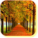 Autumn Maple Live Wallpaper icon