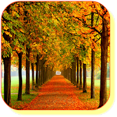 Autumn Maple Live Wallpaper