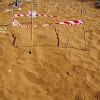 Loggerhead Tracks & Nest (Ίχνη και φωλιά της Χελώνα Καρέττα)