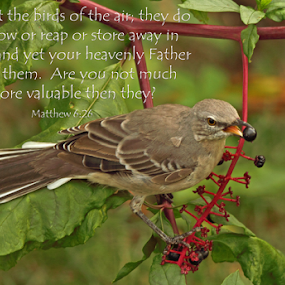 Matthew 6:26 by Melanie Melograne - Typography Quotes & Sentences ( matthew 6:26, mocking bird, birds of the air )