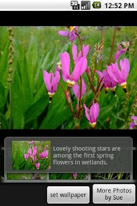 Alaska's Wild Flowers Pro screenshot 3