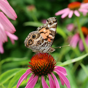 FlutterBy2 by Kenny Fendler - Animals Insects & Spiders