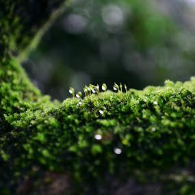 Khoảng lặng by Lê Thị Thanh  Tâm - Nature Up Close Leaves & Grasses