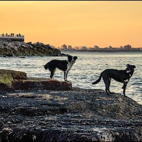 Sunset with my friends by Sergio Moya - Animals - Dogs Portraits ( argentina, dogs, sunset, sea, sunrise, beach, landscape, rocks, , #GARYFONGPETS, #SHOWUSYOURPETS )