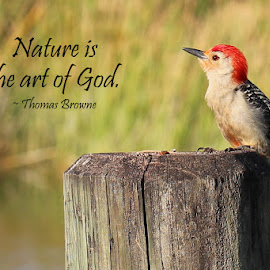 Nature is the Art of God by Lorri Nussbaum - Typography Quotes & Sentences ( bird, thomas browne, red-bellied, god, nature, quote, art, woodpecker,  )