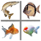 Kids Memory Game: Fish