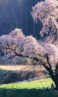 Screenshot of Japan Wallpapers