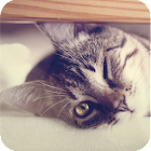 Kitty Live Wallpaper icon
