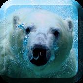 White Bear Live Wallpaper