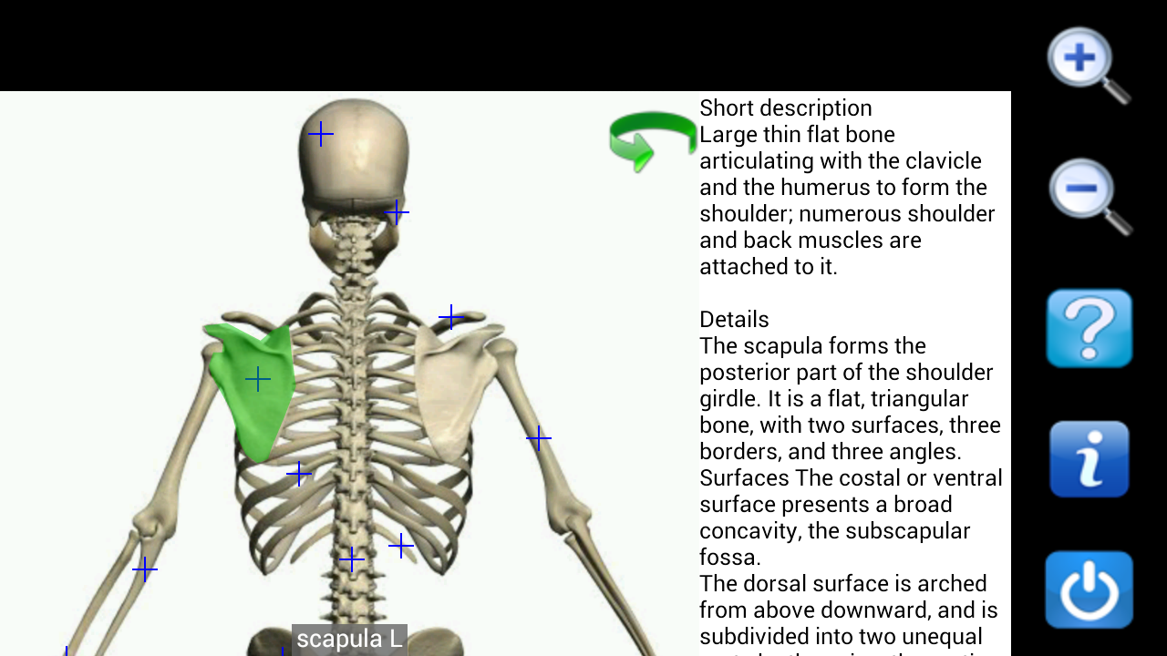 Visual Anatomy Free - screenshot