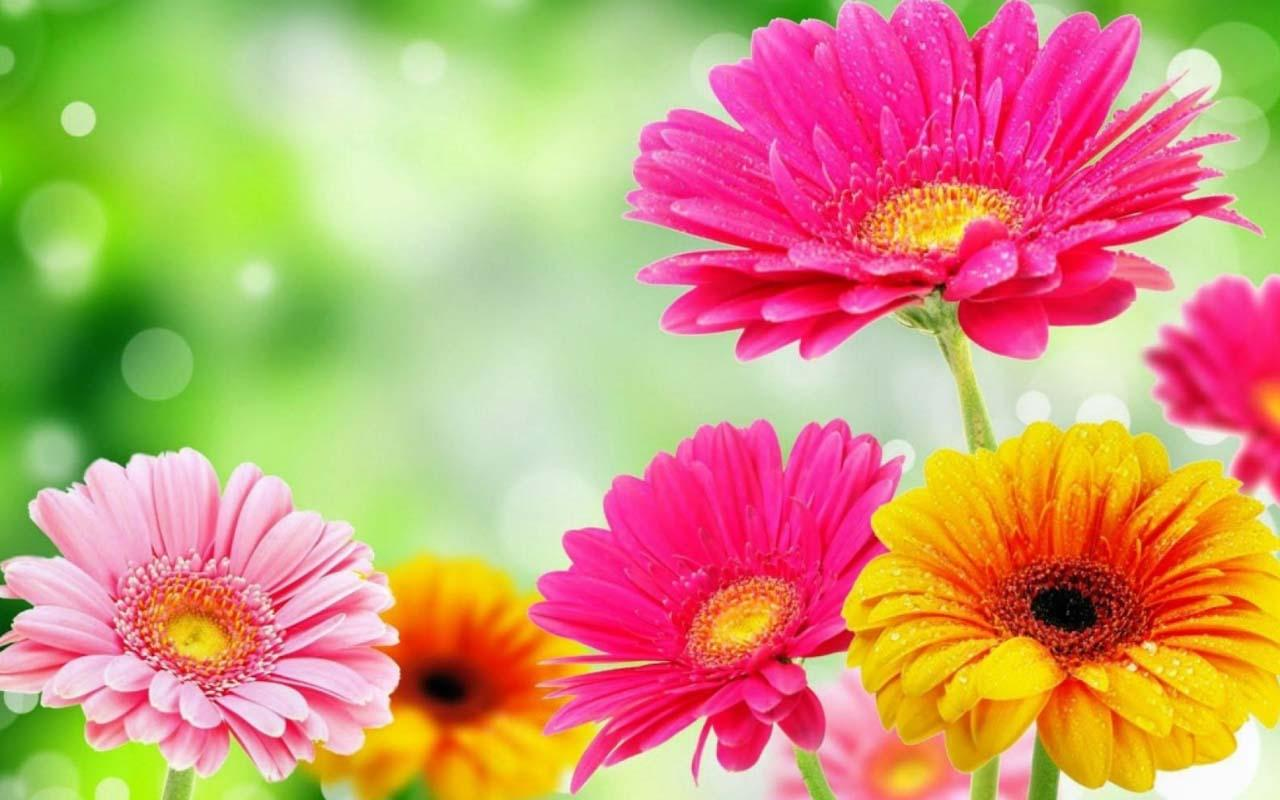 Download the 3d spring flower android apps on - Flower wallpaper 3d pic ...