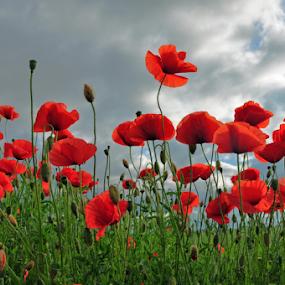 by Albina Jasinskaite - Flowers Flowers in the Wild