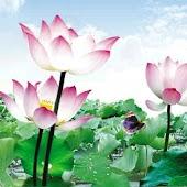 Fresh Lotus 3D Live Wallpaper