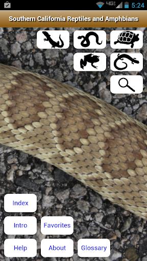 SoCal Reptiles and Amphibians