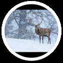 Photo Snowfall live wallpaper icon