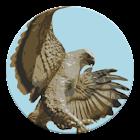 Event Hawk icon
