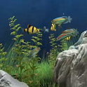 Dream Aquarium Live Wallpaper icon
