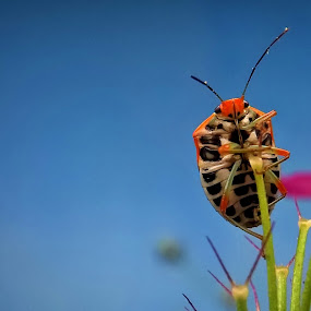 On the top by Dhani Prasetya Yudhistira - Instagram & Mobile Other ( orange, macro, bugs, blue, orange. color )
