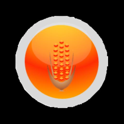 Corn ข้าวโพด